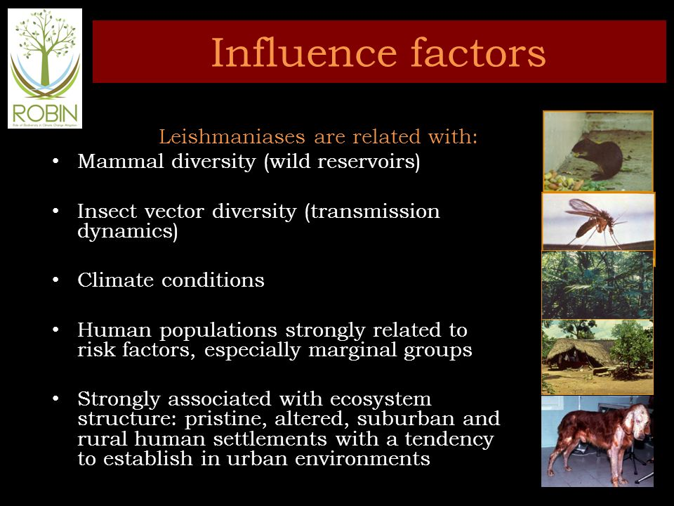 Influence factors Leishmaniases are related with: