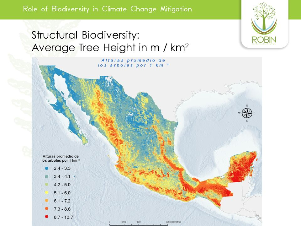 Structural Biodiversity: Average Tree Height in m / km2