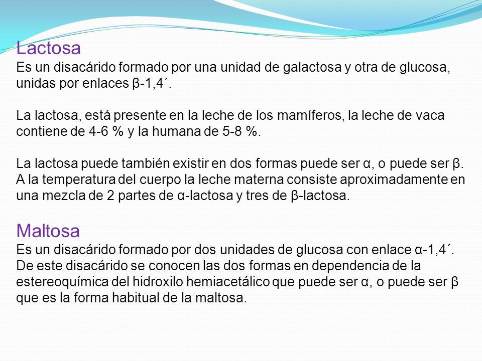 Lactosa Es un disacárido formado por una unidad de galactosa y otra de glucosa, unidas por enlaces β-1,4΄.