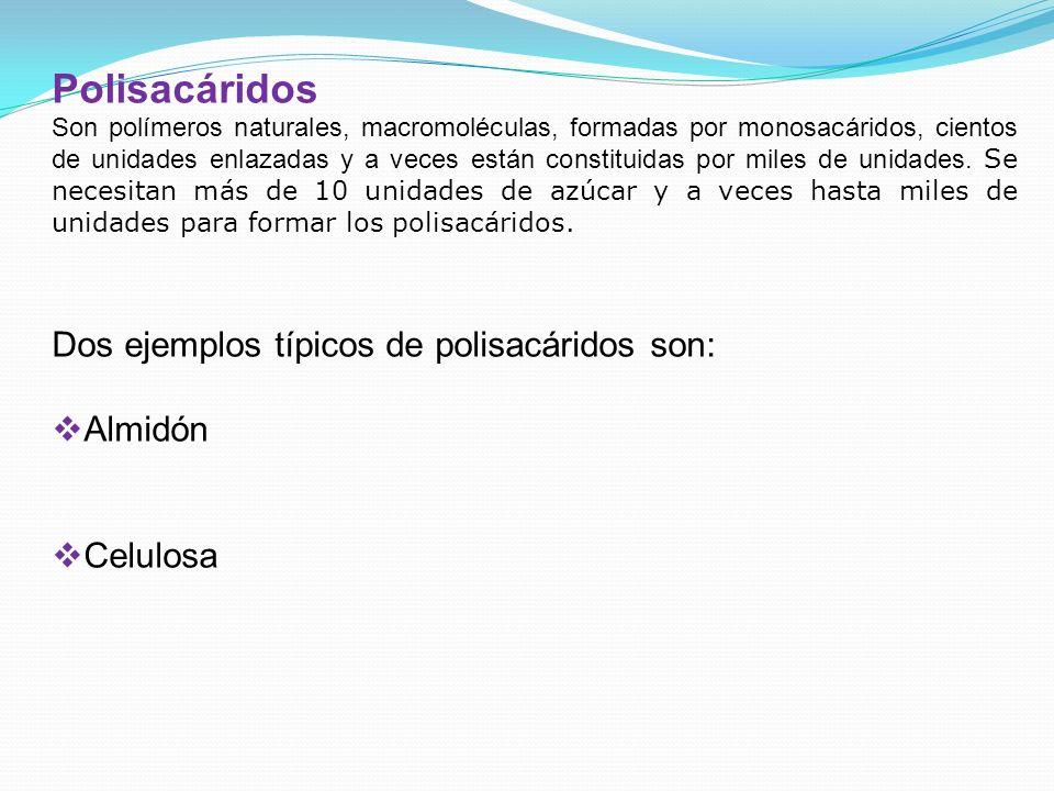 Polisacáridos Dos ejemplos típicos de polisacáridos son: Almidón