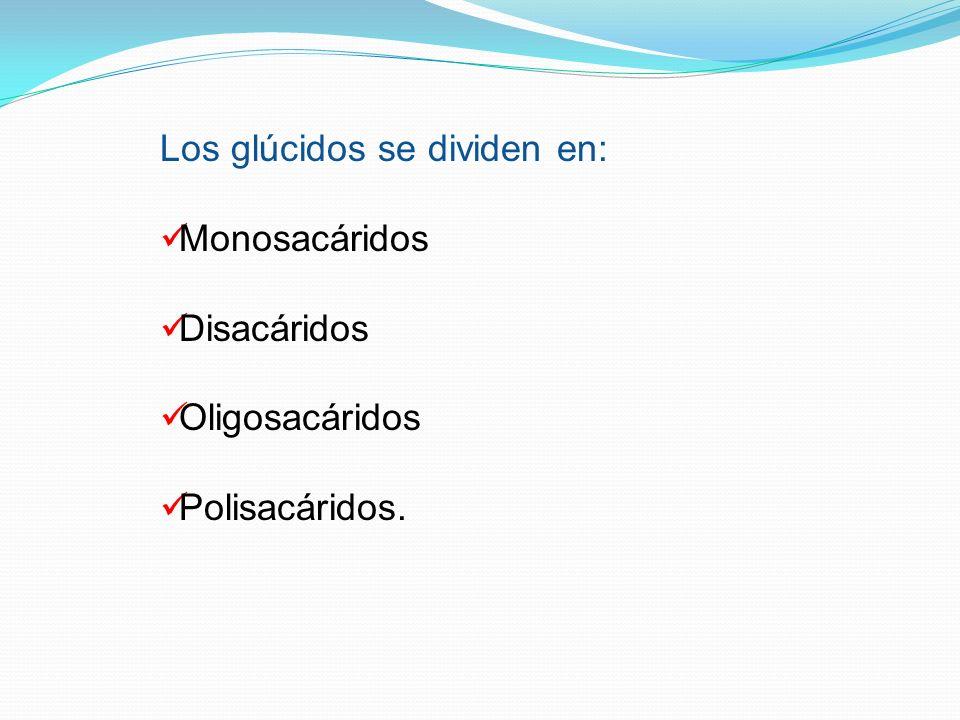 Los glúcidos se dividen en: