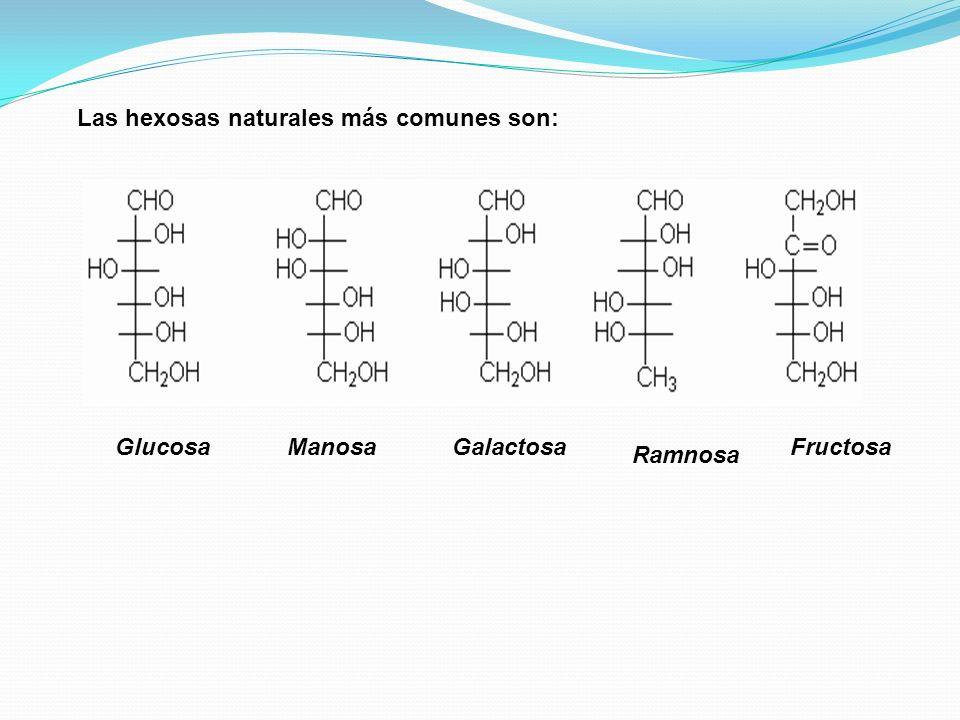 Las hexosas naturales más comunes son: