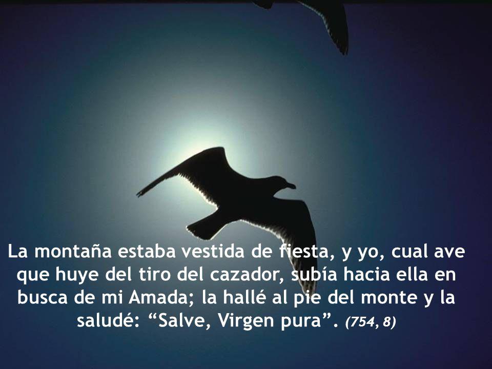 La montaña estaba vestida de fiesta, y yo, cual ave que huye del tiro del cazador, subía hacia ella en busca de mi Amada; la hallé al pie del monte y la saludé: Salve, Virgen pura . (754, 8)