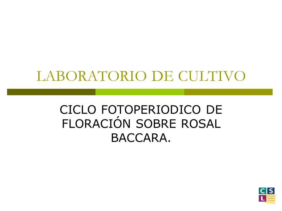 LABORATORIO DE CULTIVO
