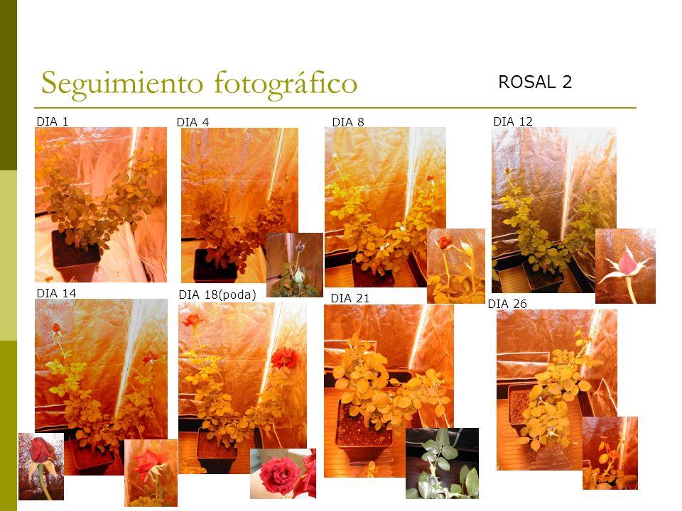 Seguimiento fotográfico