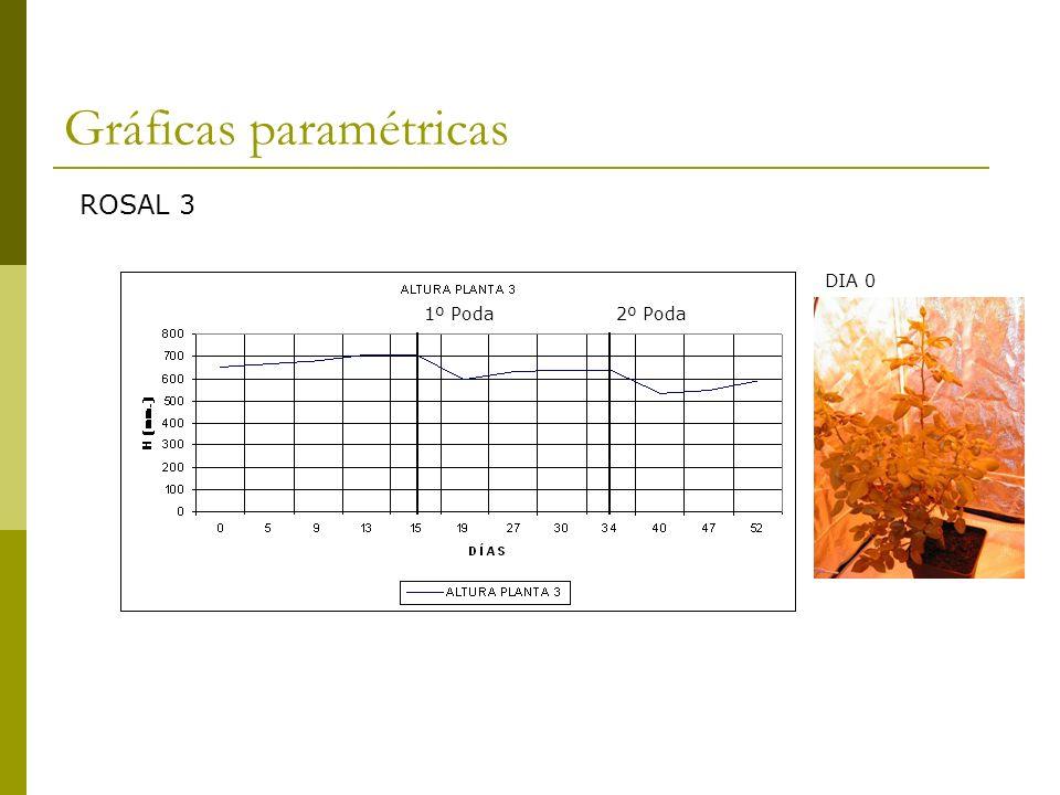 Gráficas paramétricas
