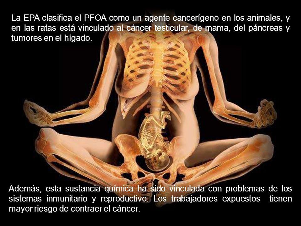 La EPA clasifica el PFOA como un agente cancerígeno en los animales, y en las ratas está vinculado al cáncer testicular, de mama, del páncreas y tumores en el hígado.
