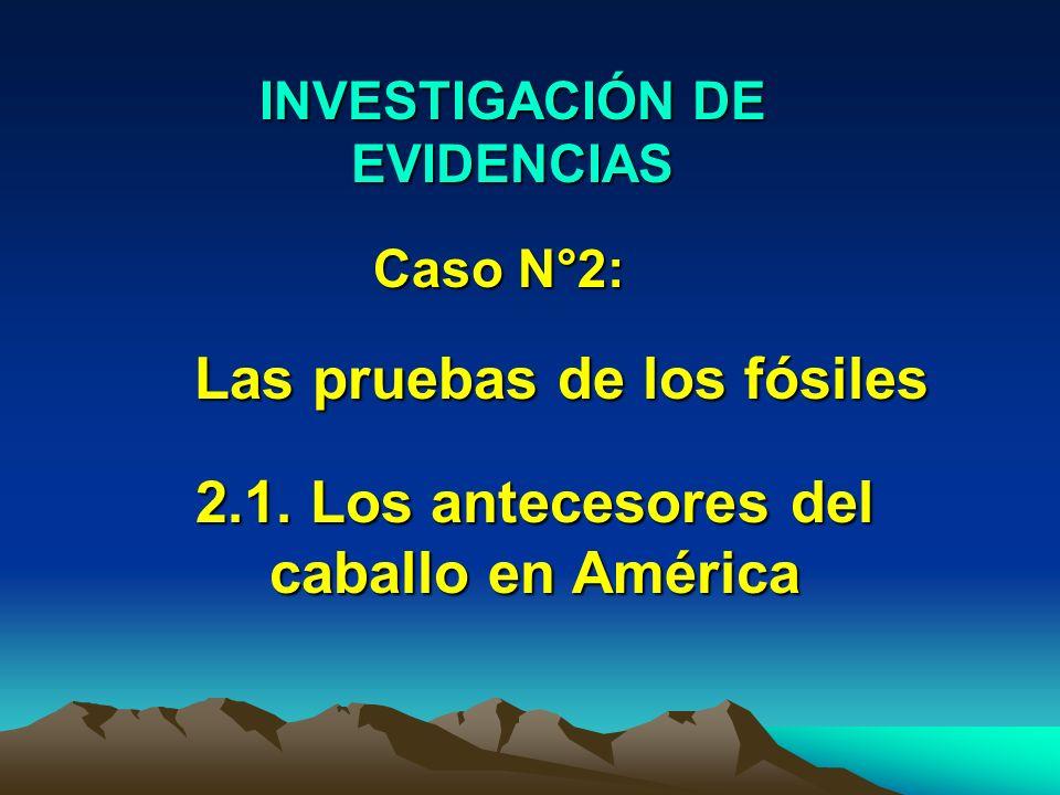 Las pruebas de los fósiles 2.1. Los antecesores del caballo en América