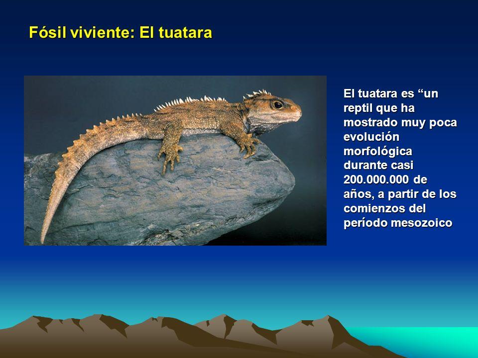 Fósil viviente: El tuatara