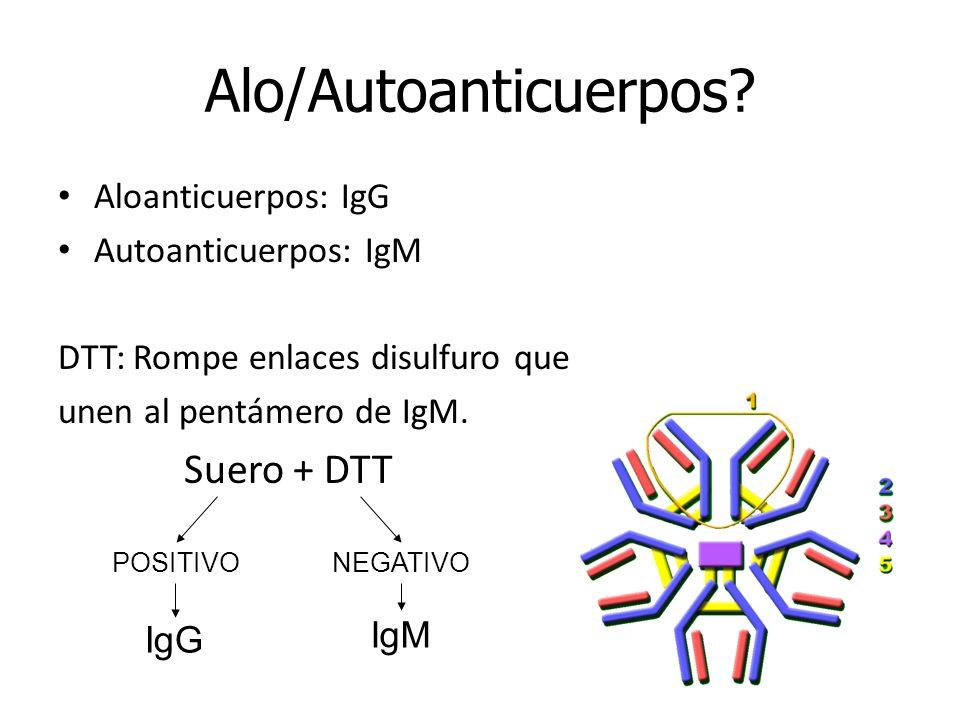 Alo/Autoanticuerpos Suero + DTT Aloanticuerpos: IgG