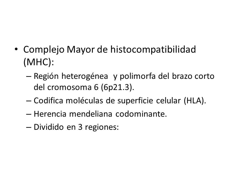 Complejo Mayor de histocompatibilidad (MHC):