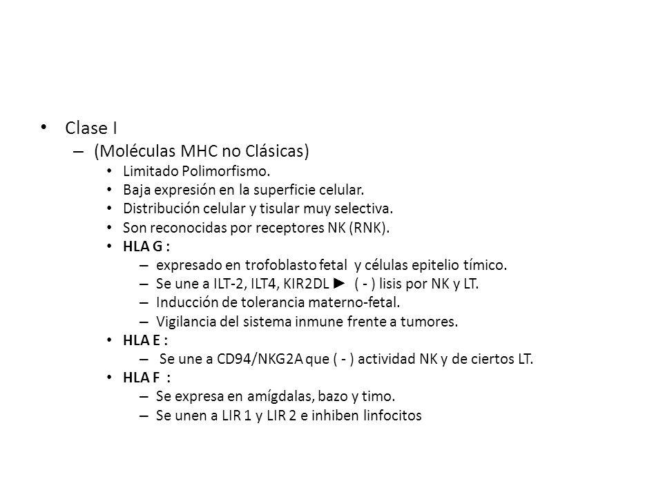 Clase I (Moléculas MHC no Clásicas) Limitado Polimorfismo.