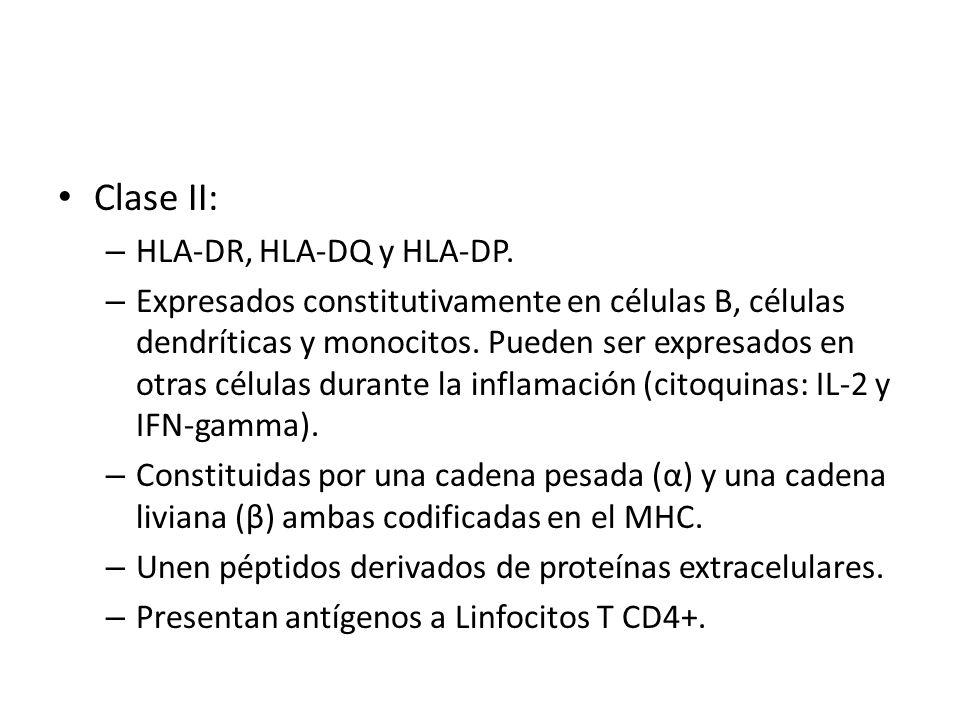 Clase II: HLA-DR, HLA-DQ y HLA-DP.
