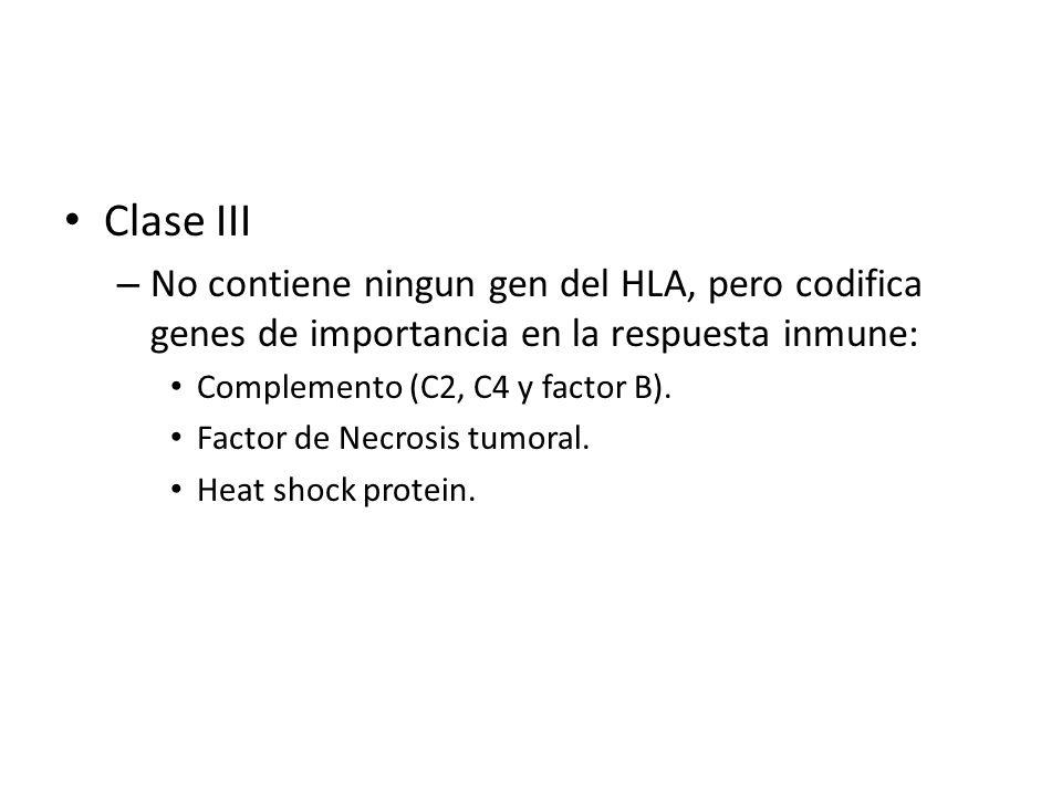 Clase III No contiene ningun gen del HLA, pero codifica genes de importancia en la respuesta inmune:
