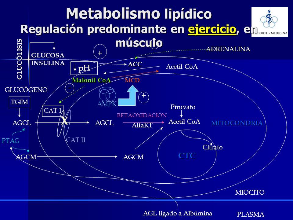 Metabolismo lipídico Regulación predominante en ejercicio, en músculo