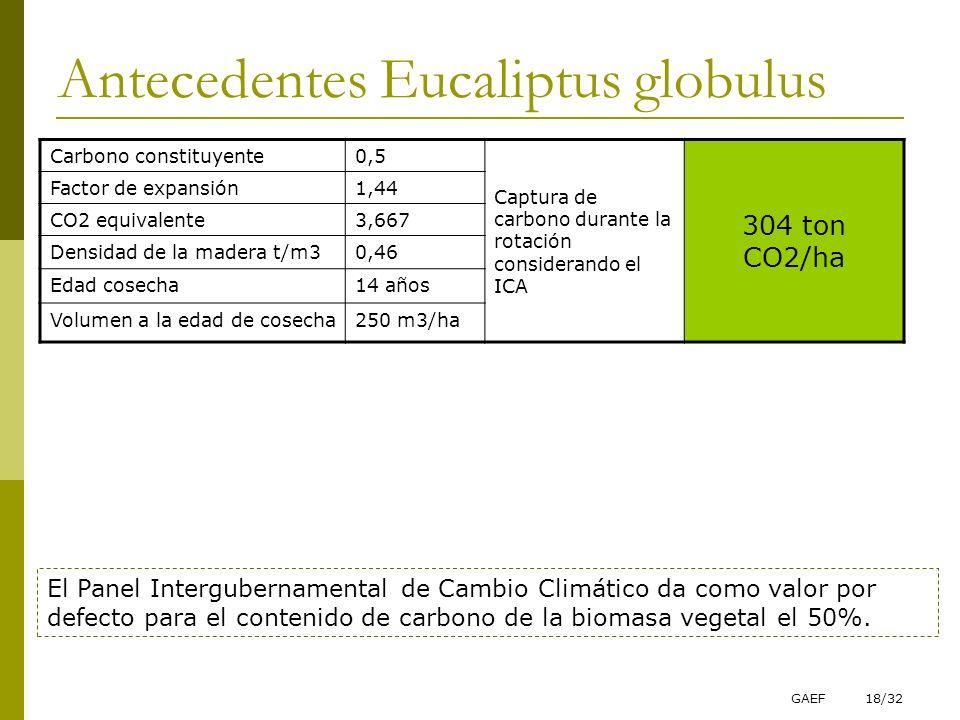 Antecedentes Eucaliptus globulus