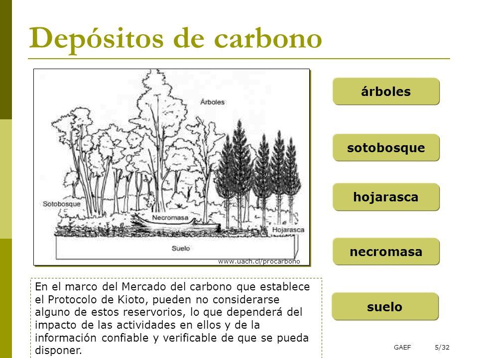 Depósitos de carbono árboles sotobosque hojarasca necromasa suelo