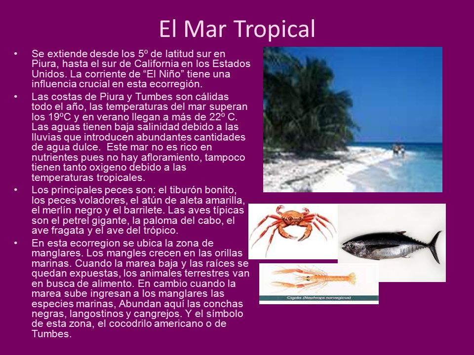 El Mar Tropical