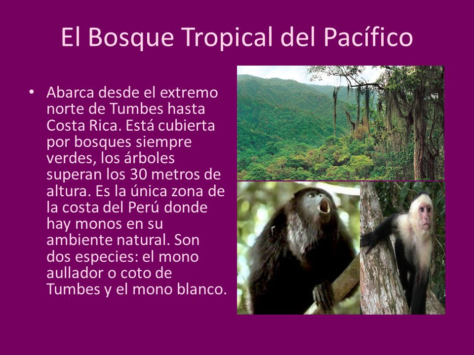 El Bosque Tropical del Pacífico
