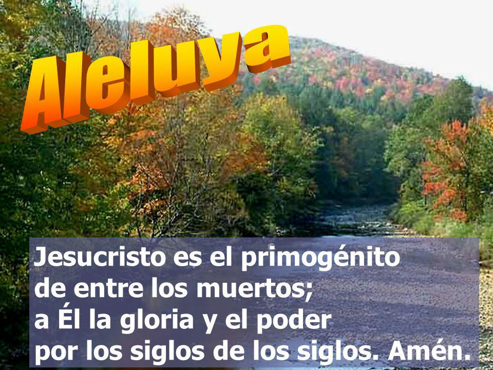 Aleluya Jesucristo es el primogénito de entre los muertos; a Él la gloria y el poder por los siglos de los siglos.