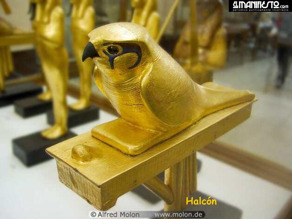 Falcon Halcón