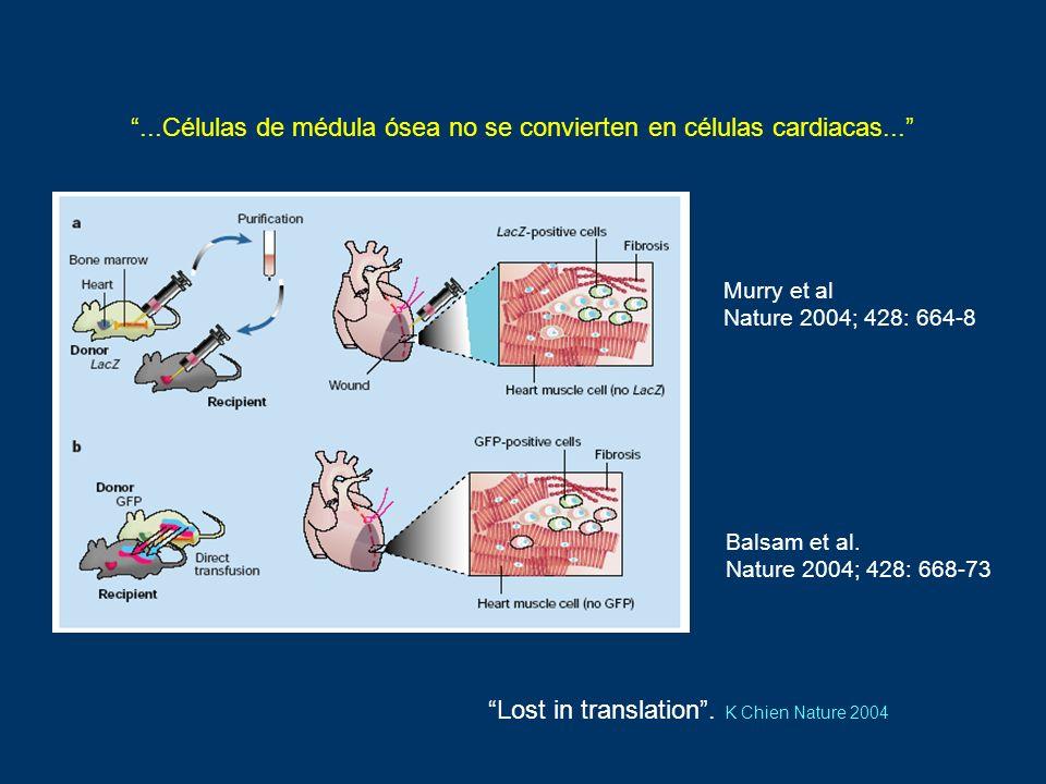...Células de médula ósea no se convierten en células cardiacas...