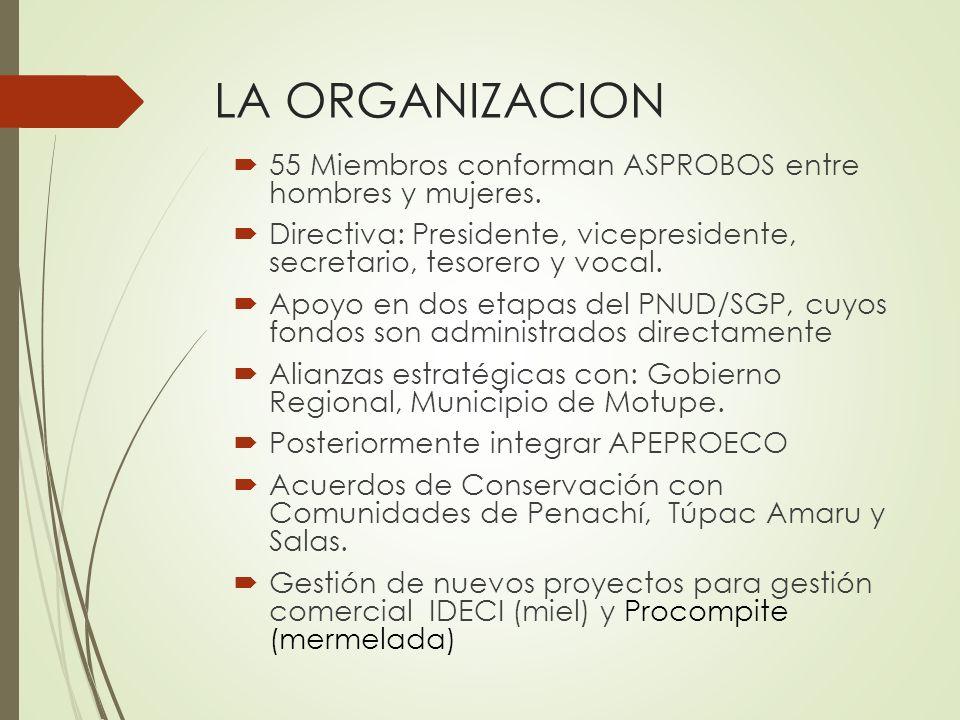LA ORGANIZACION 55 Miembros conforman ASPROBOS entre hombres y mujeres. Directiva: Presidente, vicepresidente, secretario, tesorero y vocal.