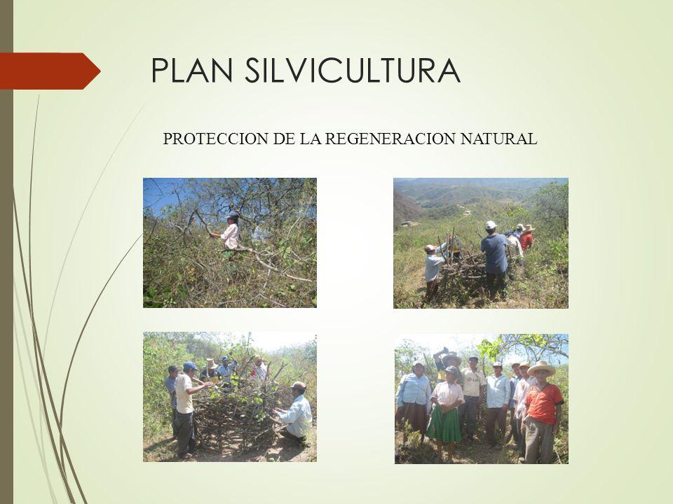 PLAN SILVICULTURA PROTECCION DE LA REGENERACION NATURAL