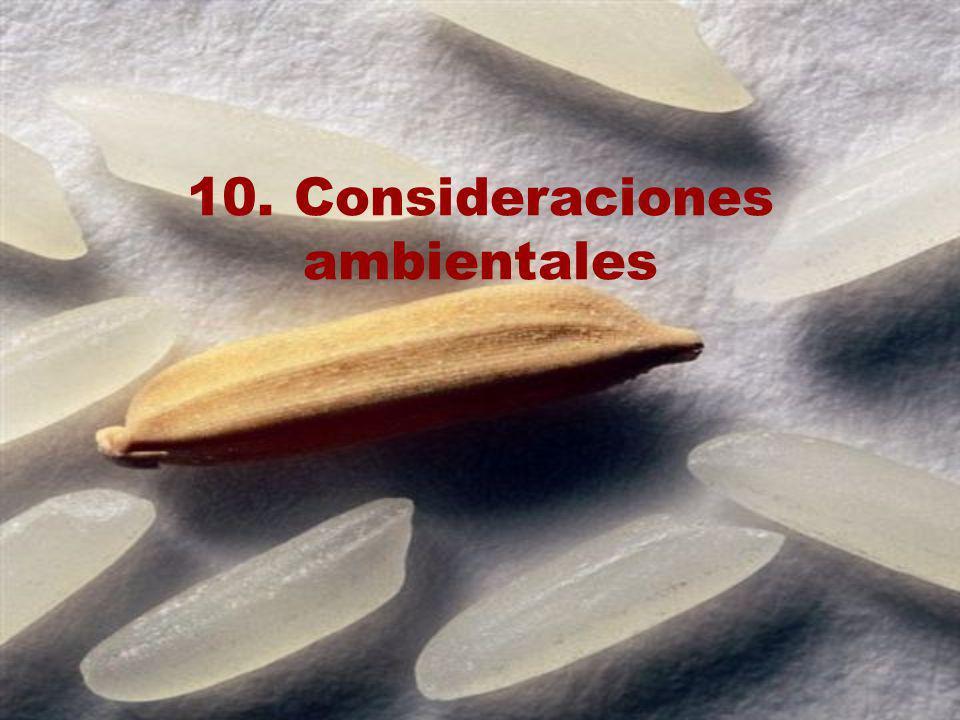 10. Consideraciones ambientales