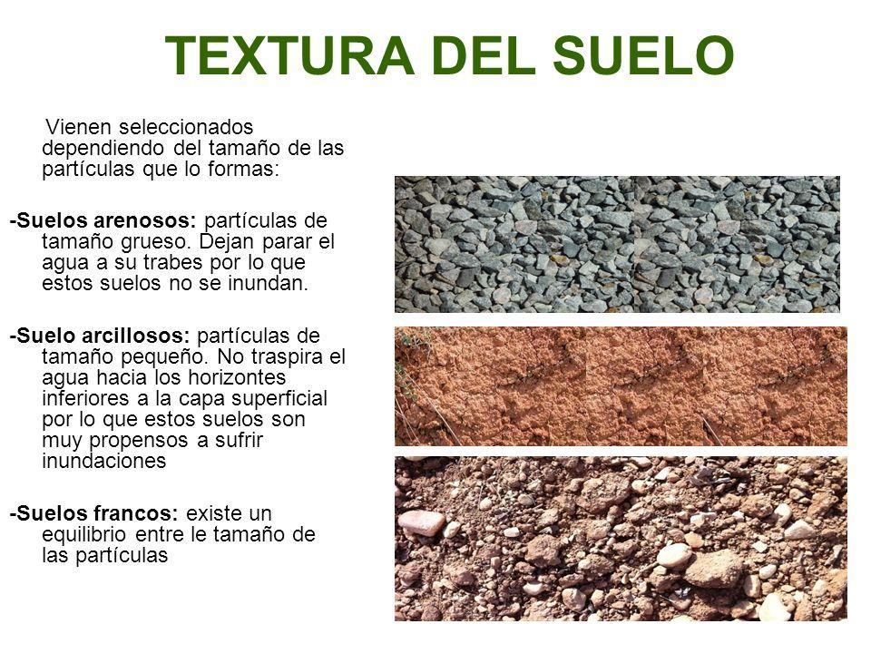 El suelo el suelo el suelo el suelo el suelo el suelo el for Caracteristicas de los suelos