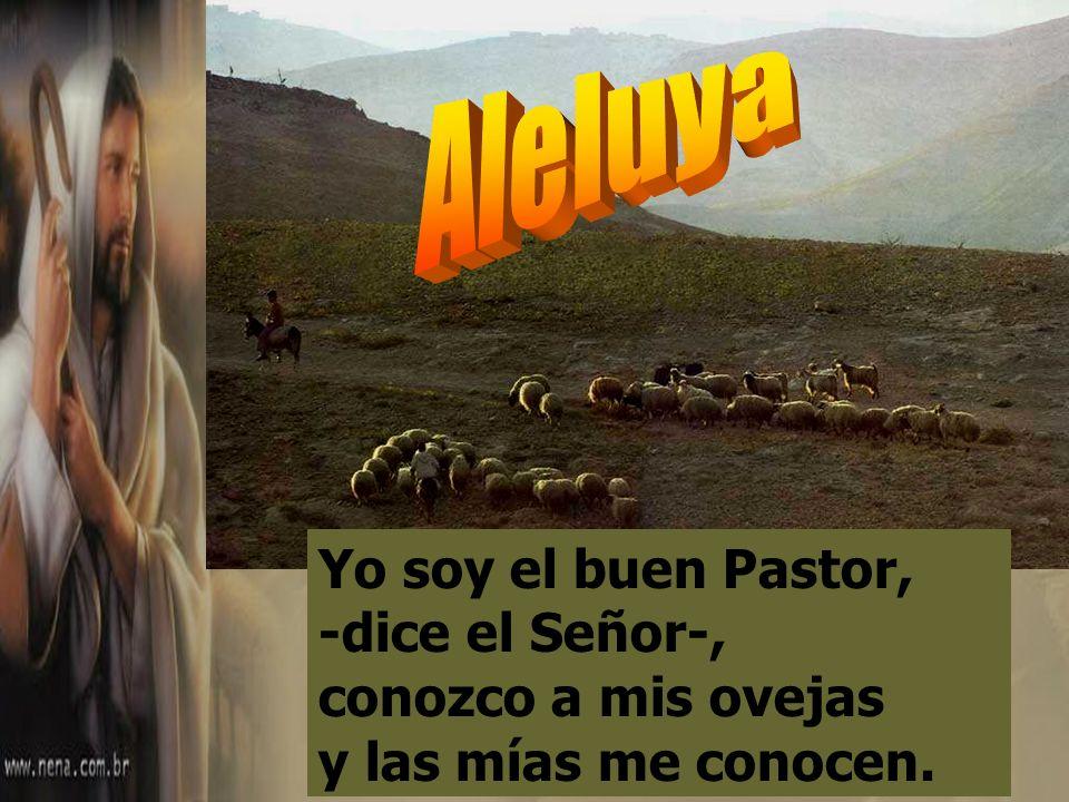Aleluya Yo soy el buen Pastor, -dice el Señor-, conozco a mis ovejas y las mías me conocen.