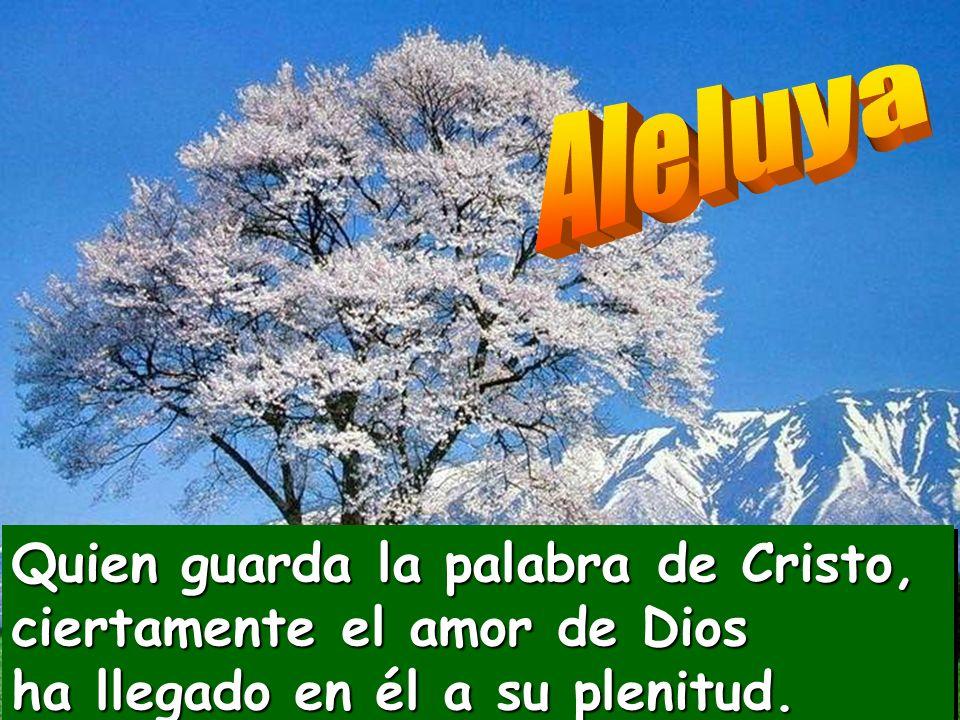 Aleluya Quien guarda la palabra de Cristo, ciertamente el amor de Dios ha llegado en él a su plenitud.