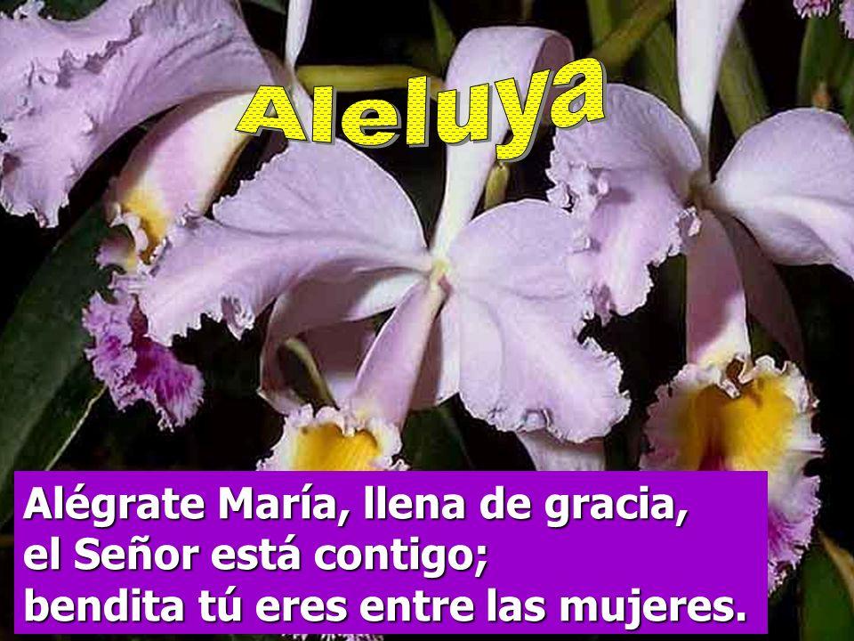 Aleluya Alégrate María, llena de gracia, el Señor está contigo; bendita tú eres entre las mujeres.