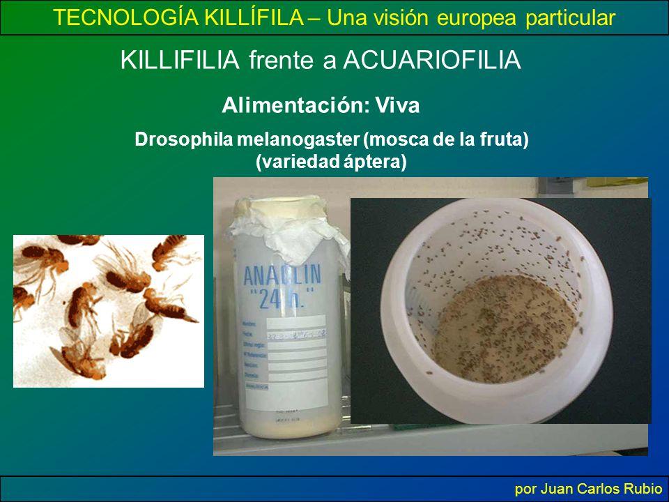 Drosophila melanogaster (mosca de la fruta) (variedad áptera)