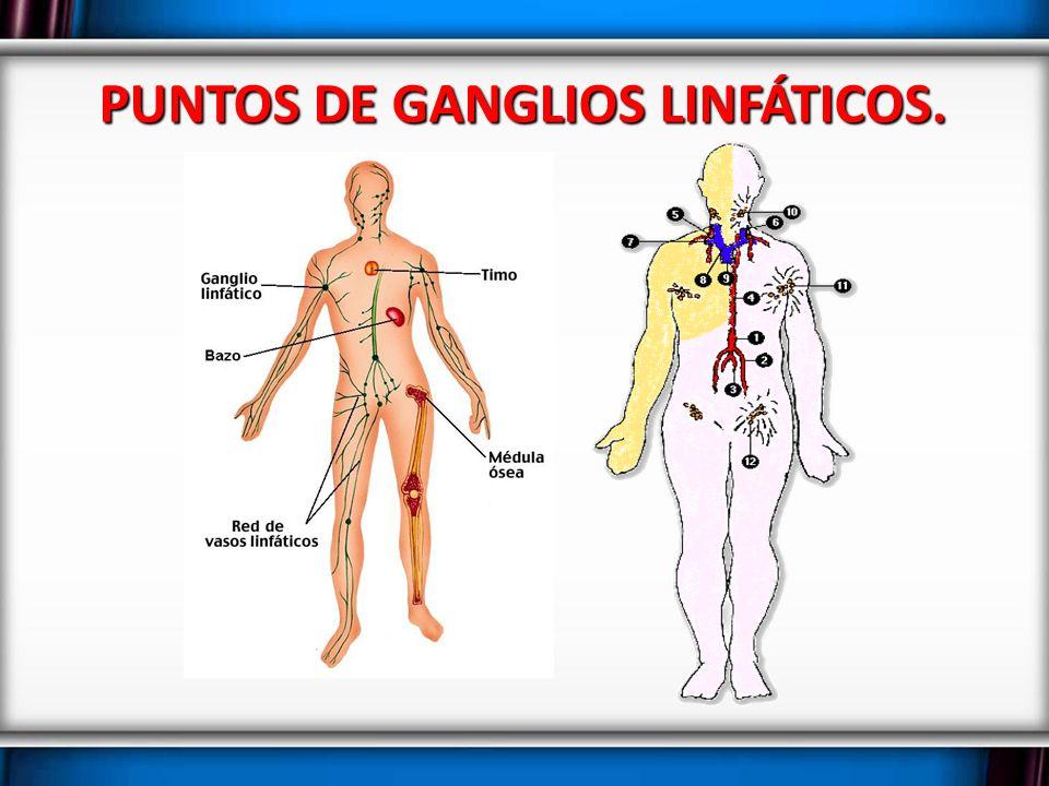 Atractivo Donde Son Los Ganglios Linfáticos Situados En El Cuerpo ...