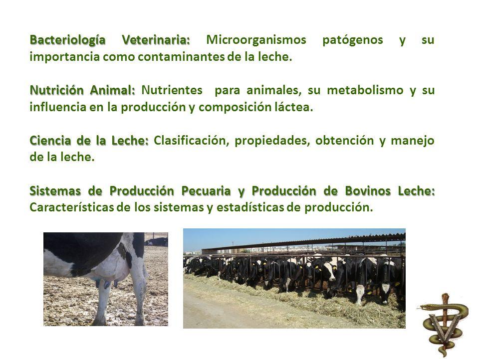 Bacteriología Veterinaria: Microorganismos patógenos y su importancia como contaminantes de la leche.