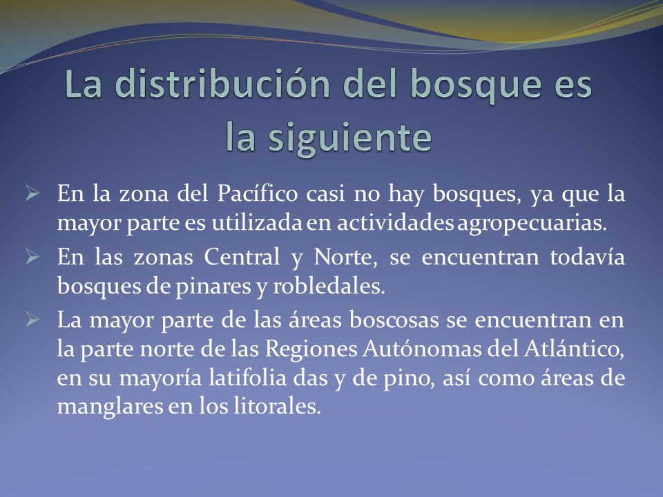 La distribución del bosque es la siguiente