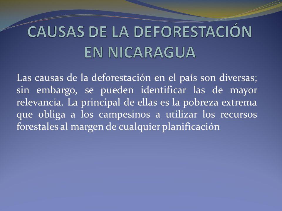 CAUSAS DE LA DEFORESTACIÓN EN NICARAGUA