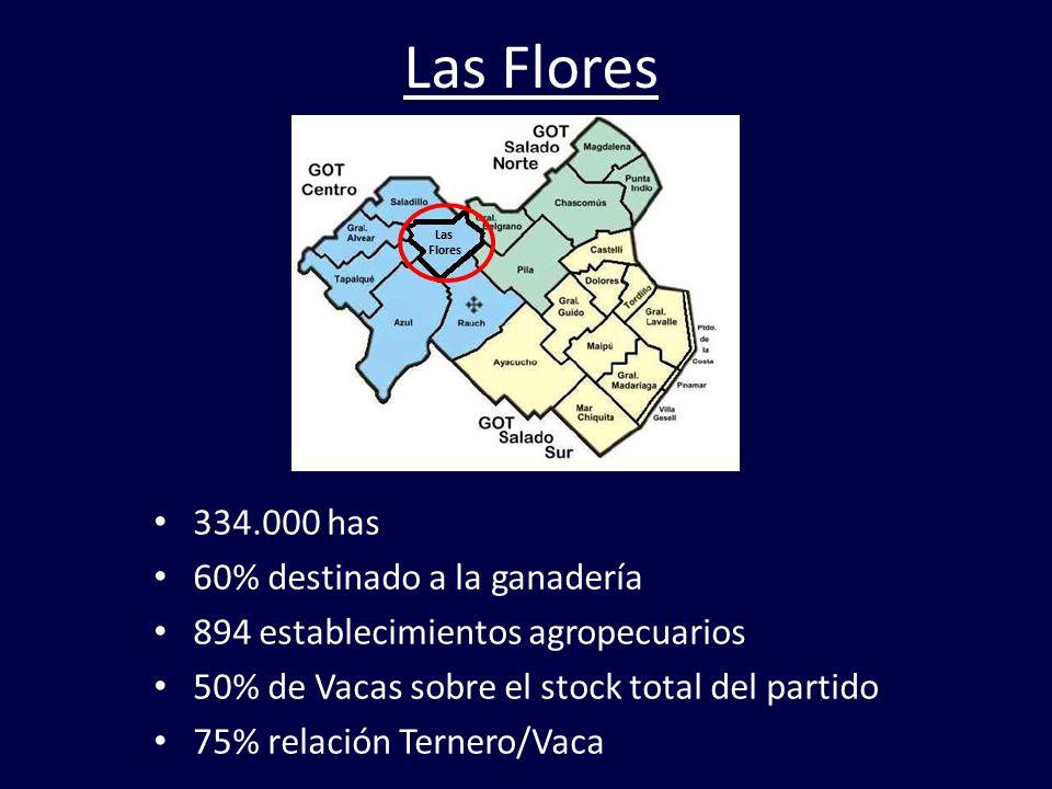 Las Flores 334.000 has 60% destinado a la ganadería