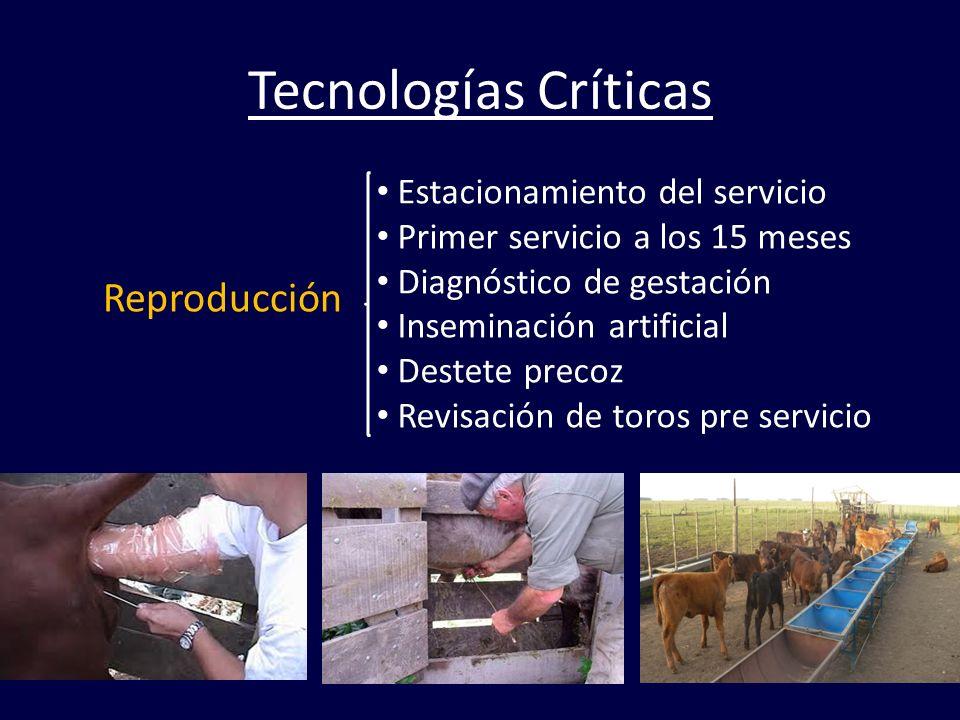 Tecnologías Críticas Reproducción Estacionamiento del servicio