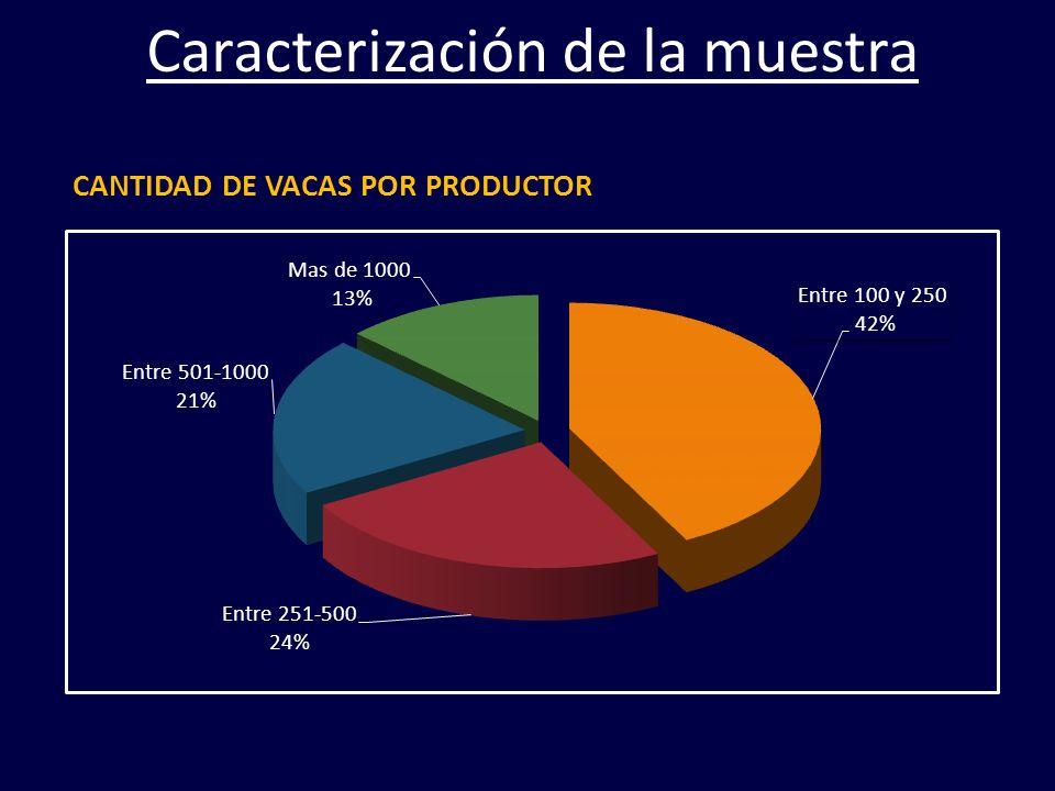 CANTIDAD DE VACAS POR PRODUCTOR