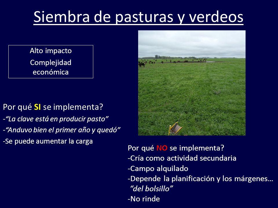 Siembra de pasturas y verdeos
