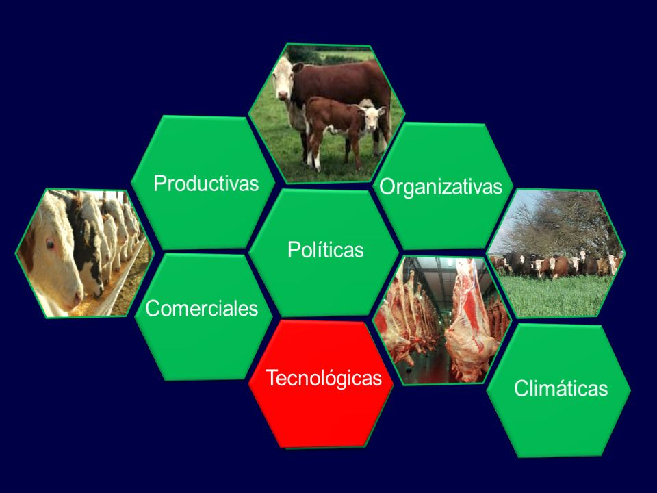 Productivas Organizativas Políticas Comerciales Tecnológicas Tecnológicas Climáticas
