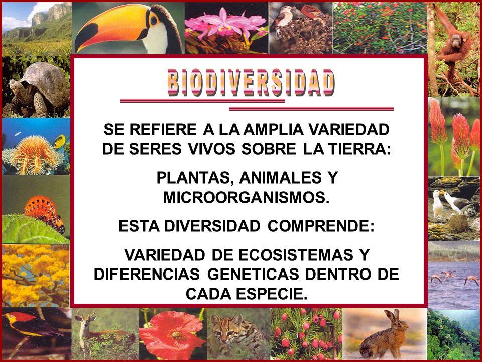 BIODIVERSIDAD SE REFIERE A LA AMPLIA VARIEDAD DE SERES VIVOS SOBRE LA TIERRA: PLANTAS, ANIMALES Y MICROORGANISMOS.