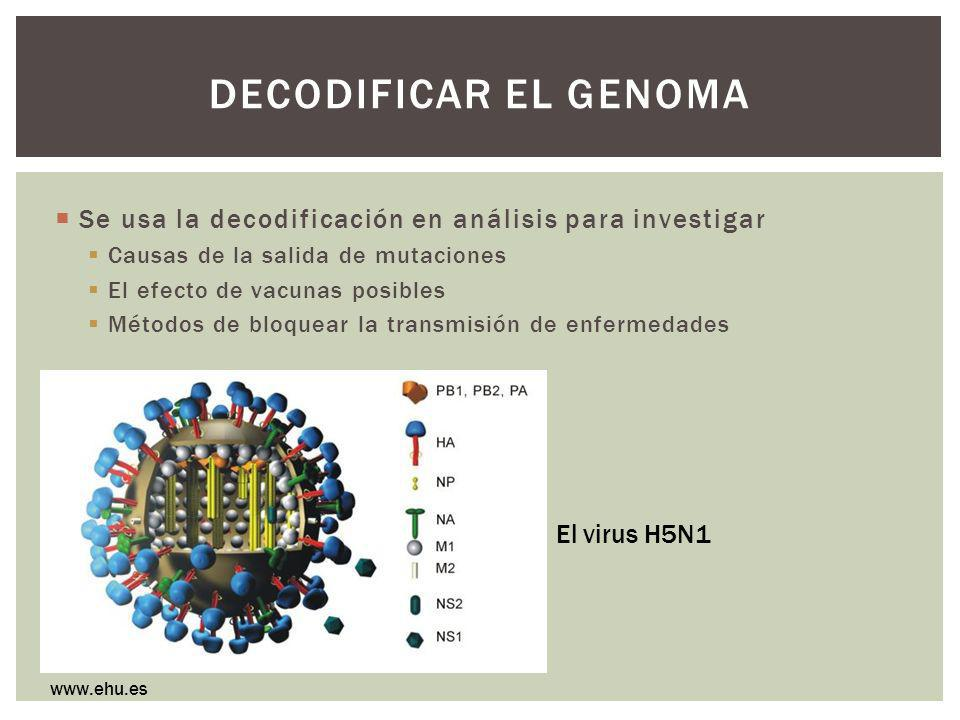 Decodificar el genoma Se usa la decodificación en análisis para investigar. Causas de la salida de mutaciones.