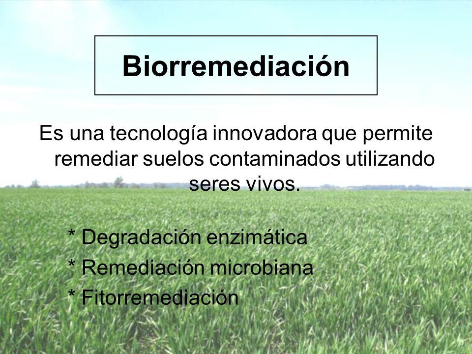 Biorremediación Es una tecnología innovadora que permite remediar suelos contaminados utilizando seres vivos.