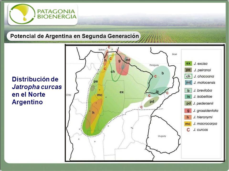 Distribución de Jatropha curcas en el Norte Argentino