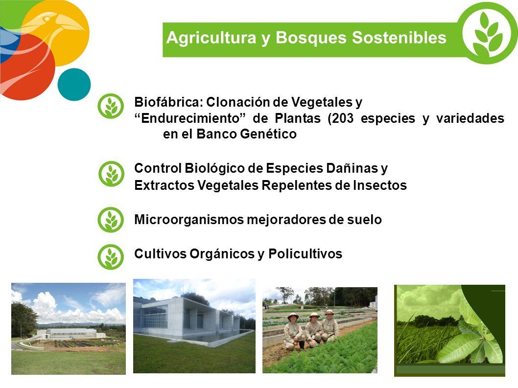 Biofábrica: Clonación de Vegetales y
