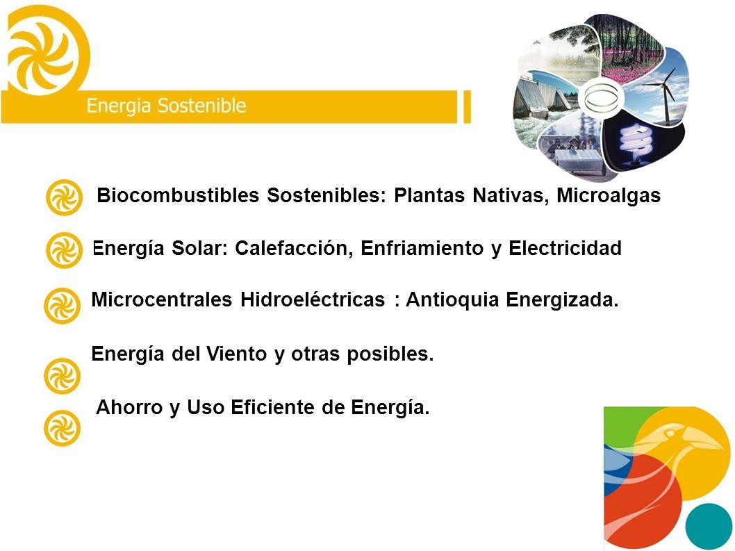 Biocombustibles Sostenibles: Plantas Nativas, Microalgas