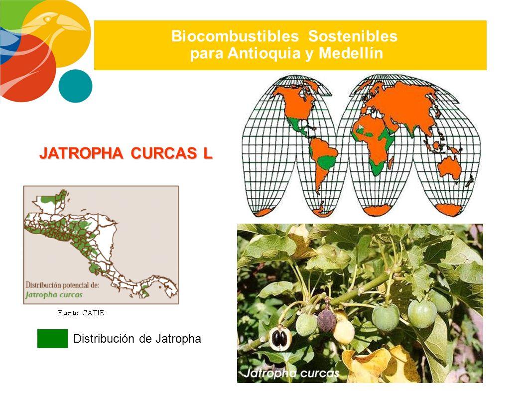 Biocombustibles Sostenibles para Antioquia y Medellín